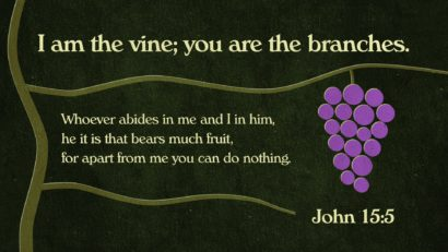 Permalink to:Abiding In The Vine!